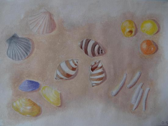 004 coquillage a